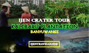 Ijen Crater Kalibaru Tour